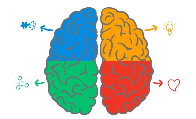 cérebro de Ned Hermann